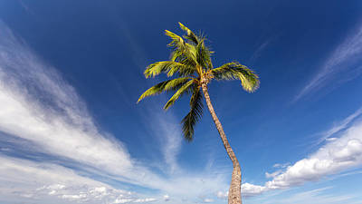 Photograph - Sunny Palm Tree by Pierre Leclerc Photography