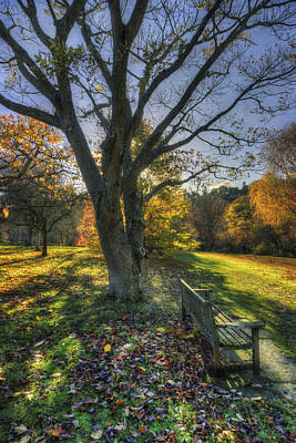 Photograph - Sunny Park Walk by Ian Mitchell