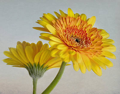 Photograph - Sunny Side Up by David and Carol Kelly