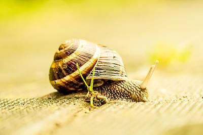 Sunny Snail Art Print by Daniel Daniel