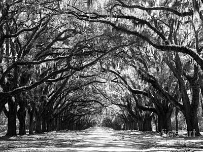 Savannah Live Oaks Photograph - Sunny Southern Day - Black And White 24 X 18 by Carol Groenen