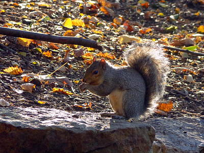 Photograph - Sunny Squirrel by Joseph Skompski