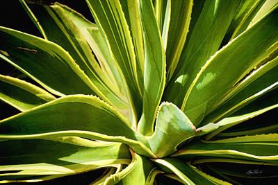 Photograph - Sunny Succulent by Ann Powell
