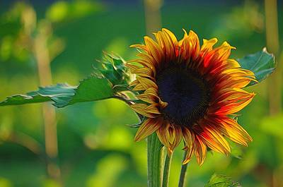 Photograph - Sunny Sunflower by Denise Darby
