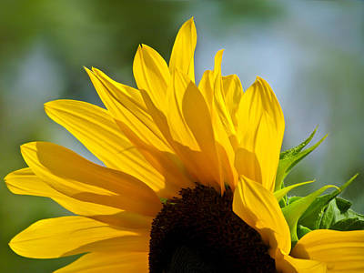 Sunflower Photograph - Sunny Sunflower by Eva Kondzialkiewicz