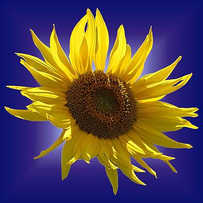 Photograph - Sunny Sunflower On Purple by MTBobbins Photography