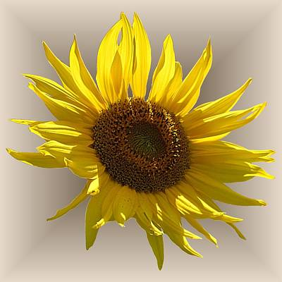 Photograph - Sunny Sunflower On Tan by MTBobbins Photography