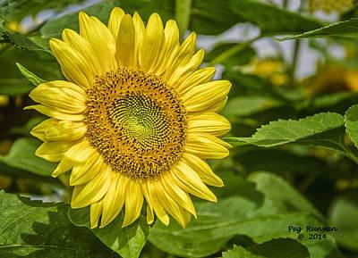 Photograph - Sunny Sunflower by Peg Runyan