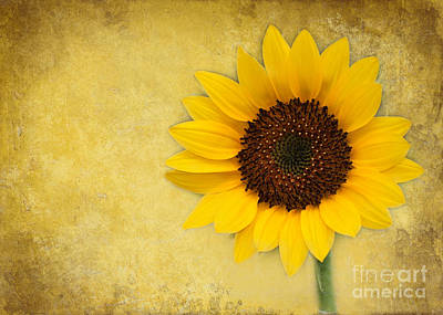 Florida Flowers Photograph - Sunny Sunflower by Sabrina L Ryan