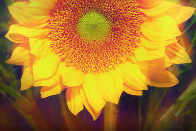Sunny Sunflower  Art Print by Susan Stone