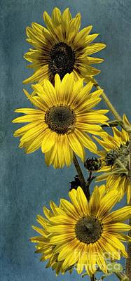 Photograph - Sunny Sunflowers by Peggy Hughes