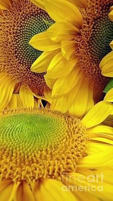 Photograph - Sunny Sunflowers by Susan Garren