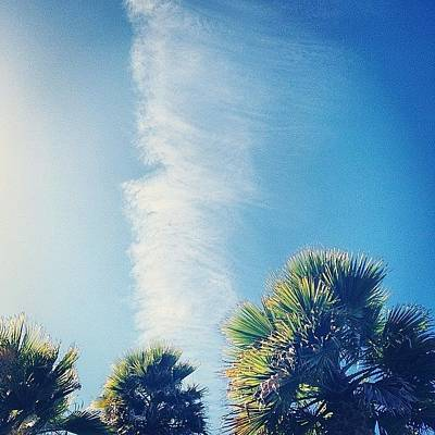 Jet Photograph - Palms And Clear Skies by Freya Doney