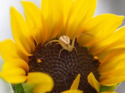 Photograph - Sunny The Spider by HW Kateley