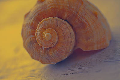 Shell Photograph - Sunny Thoughts by Bonnie Bruno