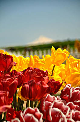 Photograph - Sunny Tulip Day by Mindy Bench