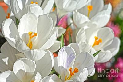 Sunny White Flowers Art Print by Nur Roy