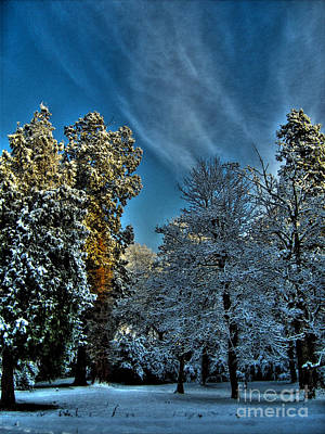 Photograph - Sunny Winter Day by Nina Ficur Feenan