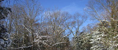 Photograph - Sunny Winter Sky by Good Taste Art