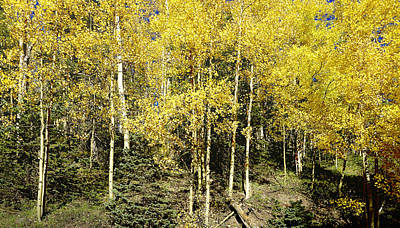 Photograph - Sunny Yellow Aspen Photography by Ann Powell