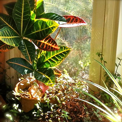 Photograph - Sunnywindow by Susan Townsend