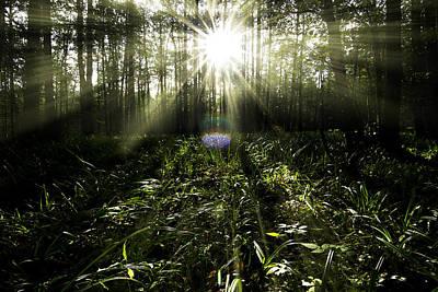 Photograph - Sunrays by Henrik Petersen