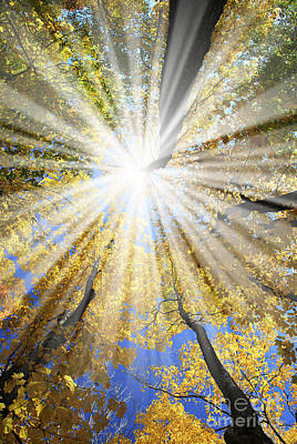 Sunny Photograph - Sunrays In The Forest by Elena Elisseeva