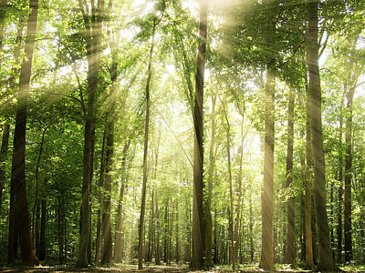 Green Color Photograph - Sunrays Through Treetops by Melissa Fague