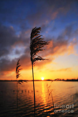 Sunrise @ The Lake Art Print by LHJB Photography