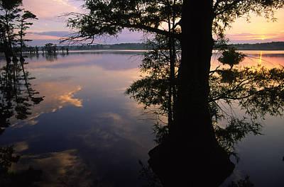 Photograph - Sunrise And Bald Cypress by Byron Jorjorian