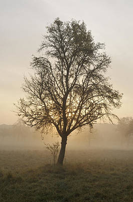 Photograph - Sunrise And Beautiful Tree by Matthias Hauser