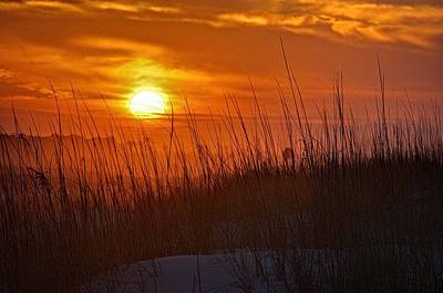 Digital Art - Sunrise And Grasses by Michael Thomas