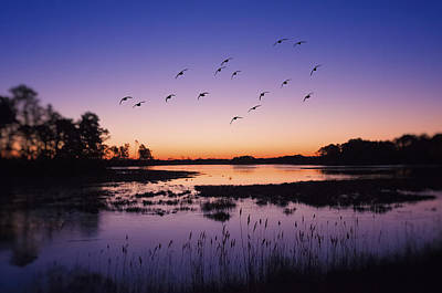 Geese Wall Art - Photograph - Sunrise At Assateague - Wetlands - Silhouette  by SharaLee Art