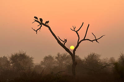 Sunrise At Bharatpur Art Print