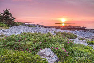 Photograph - Sunrise At Blueberry Hill In Acadia 3 by Susan Cole Kelly