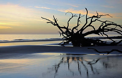 Sunrise At Driftwood Beach 6.6 Art Print