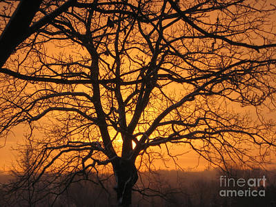 Photograph - Sunrise Behind Walnut Tree by Conni Schaftenaar