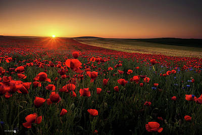 Poppies Field Photograph - Sunrise Between Poppies by C Amada T.s.