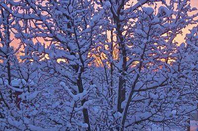 Sunrise Branches Art Print