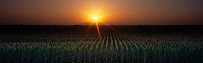 Sunrise, Crops, Farm, Sacramento Art Print by Panoramic Images