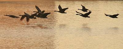 Photograph - Sunrise Flight by Diane Alexander