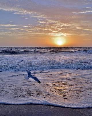 Photograph - Sunrise Flight by Kim Bemis