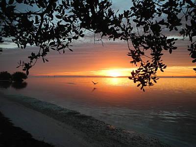 Photograph - Sunrise Flight by Susan Sidorski