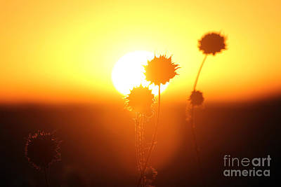 Photograph - Sunrise Florets by Alycia Christine