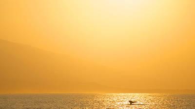 Photograph - Sunrise Fluke by Trever Miller