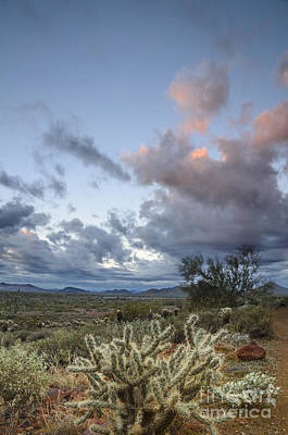 Photograph - Sunrise In The Desert by Tamara Becker
