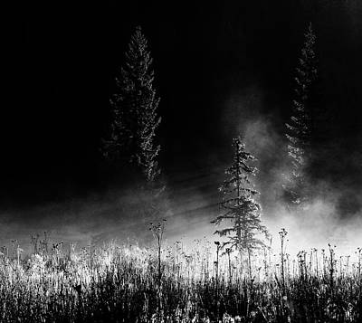Morning Light Wall Art - Photograph - Sunrise In The Forest by Julien Oncete