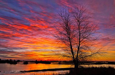 Sunrise In The Sacramento Valley Art Print