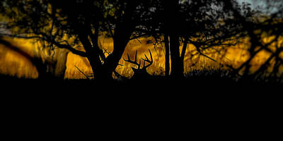 Deer Photograph - Sunrise In The Timber by Garett Gabriel