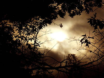 Photograph - Sunrise Mist by Wild Thing